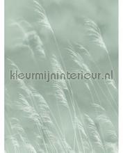 109084 fotomurali Eijffinger PiP studio wallpaper