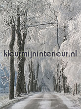 snowy road fotobehang Noordwand Evolutions II 1176