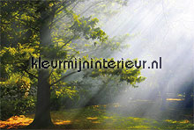 mystic forest fotobehang Noordwand Evolutions II 1181