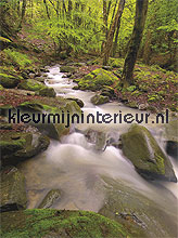 forest by a river fotobehang Noordwand Evolutions II 1185