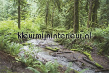 river in forest fotobehang Noordwand Evolutions II 1187