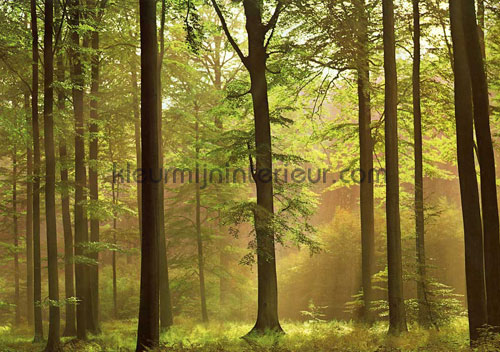 autumn forest fotobehang 216 aanbieding fotobehang Ideal Decor