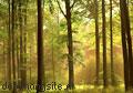 Autumn forest photomural Ideal Decor sale photomurals