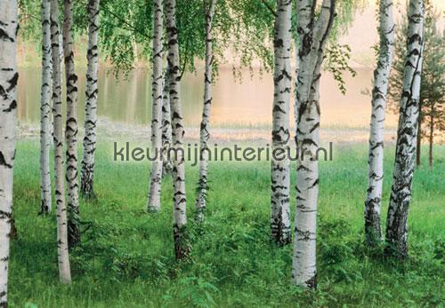 nordic forest papier murales 00290 offre Ideal Decor