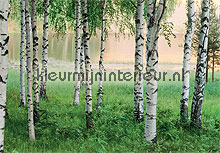 nordic forest photomural Ideal Decor Ideal-Decor Poster 00290