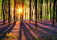 Woodland at Dawn fototapeten Ideal Decor sonderangebote fototapeten