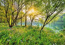 Spring Lake fotobehang Komar National Geographic 8-524