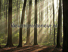 Misty Forest fotobehang Noordwand Evolutions II 1178