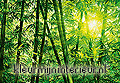 Bamboo forest fotobehang Ideal Decor Ideal-Decor Poster 123
