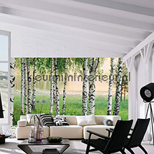 nordic forest fotobehang 00290 aanbieding fotobehang Ideal Decor