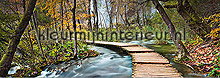 Path into the forest fotobehang Ideal Decor Bossen