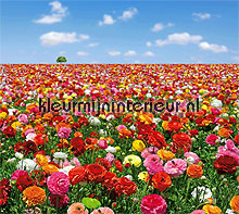 flowers field fotobehang Noordwand Evolutions II 1183
