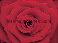 Rose fototapeten Eijffinger Wallpower mini 380056