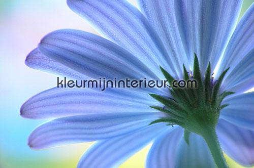 anemone fotobehang 70004 Digiwalls Dutch Wallcoverings