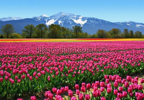 Tulips fotobehang 00137 aanbieding fotobehang Ideal Decor