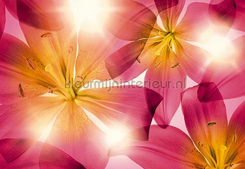 Summer Sun fotobehang 8-928 Scenics Komar