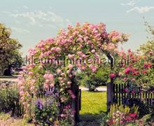 Rose Garden fotobehang Komar Scenics 8-936