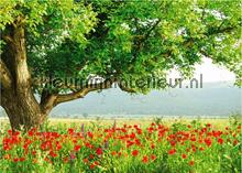 A Day In My Garden fotobehang Mantiburi behang