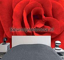 rode roos fotobehang 70017 Digiwalls Dutch Wallcoverings