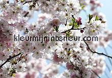 spring fotobehang Komar National Geographic 8-507