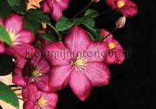 Pink flowers on black background fotobehang Kleurmijninterieur Bloemen---Planten