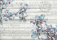 Blue orchiids on wood fotobehang Kleurmijninterieur Bloemen---Planten
