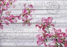 Pink orchids on wood fotobehang Kleurmijninterieur Bloemen---Planten