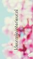 Wandpaneel Aneko blossom fotomurales Caselio Accent 67184100