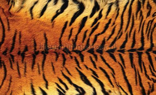 Kleur Mijn Interieur : Tiger skin photomural animals kleurmijninterieur