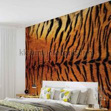 Tiger skin fotobehang Kleurmijninterieur dieren