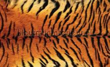 Tiger skin fotobehang Kleurmijninterieur alle afbeeldingen