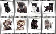 Pussycats fotobehang Kleurmijninterieur Dieren