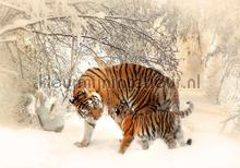 Tigers in winterlandscape fototapet Kleurmijninterieur All-images