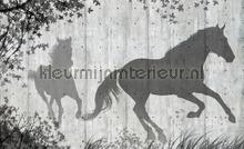 Shadow horses fototapet Kleurmijninterieur All-images