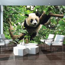 Panda fotobehang Kleurmijninterieur dieren