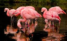 Flamingo fototapet Kleurmijninterieur All-images