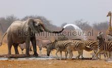 Africa fotobehang Kleurmijninterieur Dieren