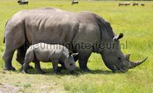 Rhino fotobehang Kleurmijninterieur Dieren