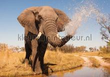 Elephant fotobehang Kleurmijninterieur Dieren