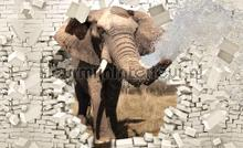 Elephant break out fototapet Kleurmijninterieur All-images