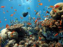 Coral reef fotobehang Kleurmijninterieur dieren