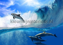 Dolphins fotobehang Kleurmijninterieur dieren
