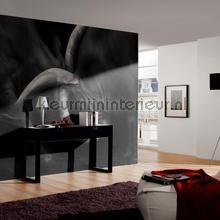 Olifantgevecht in zwart wit fotobehang Architects Paper AP Digital 2 470506-200-grams