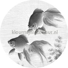 goldfish fotobehang Kek Amsterdam Circles and Panels ck-005