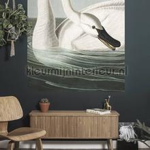 Trumpeter swan fototapeten Kek Amsterdam Fototapeten raumbilder