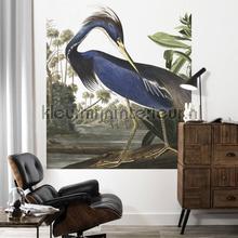 Louisiana heron fototapeten Kek Amsterdam Fototapeten raumbilder