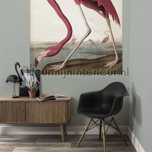 Flamingo fototapeten Kek Amsterdam Fototapeten raumbilder