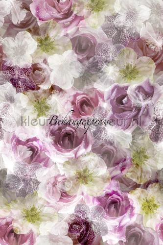 Taupy Roses fotobehang INK6060 Colour Choc Behang Expresse