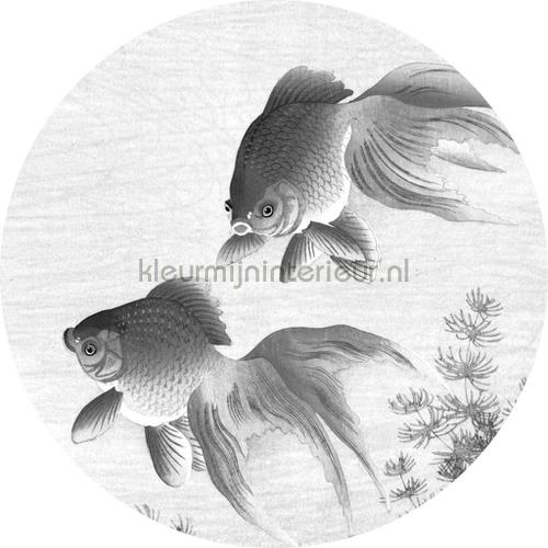 goldfish photomural ck-005 animals Kek Amsterdam