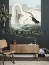 Trumpeter swan fottobehaang Kek Amsterdam _intrieur